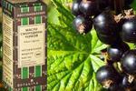 Масло черной смородины и его роль в уходе за лицом